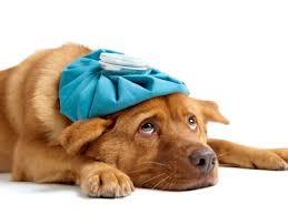 dogcold